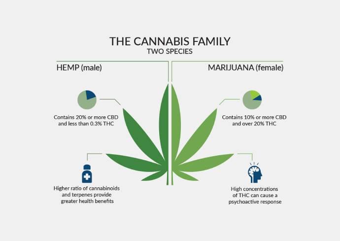 Cannabis Family